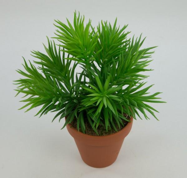 Sukkulente Crassula Tetraganu 28cm im Topf AR Kunstpflanzen künstliche Pflanzen