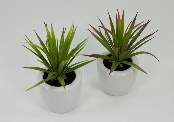 2er-Set Dracena 18cm im weißen Keramiktopf DP künstliche Pflanzen Kunstpflanzen