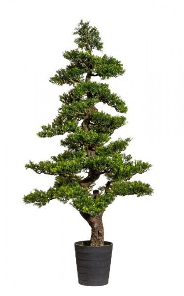Bonsai Teeblatt 150x70cm GA künstlicher Baum Kunstbaum Kunstpflanzen