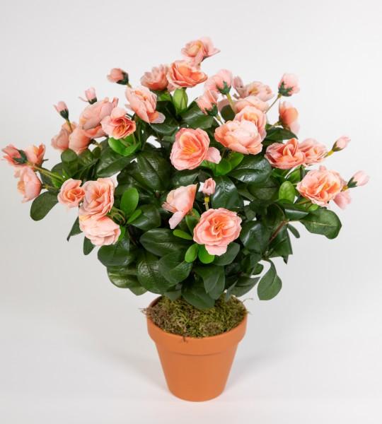 Azalee 40cm salmon / lachs im Topf ZF Kunstpflanzen Kunstblumen künstliche Blumen