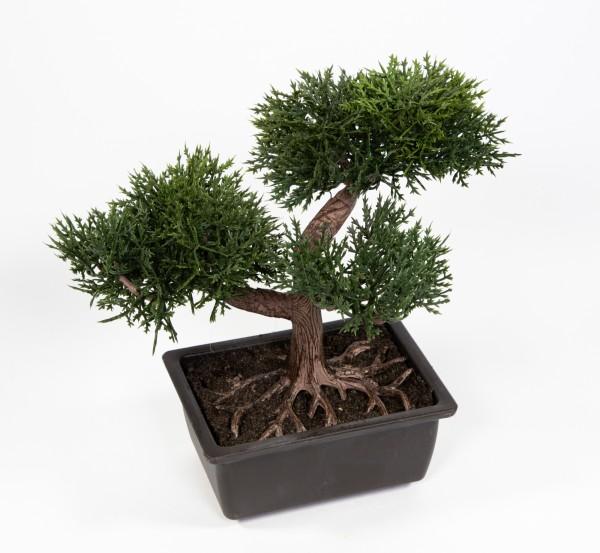 """Bonsai Kyoto """"Zeder"""" 22x20x18cm in Schale AD künstlicher Baum Kunstbaum Dekobaum Kunstpflanzen"""