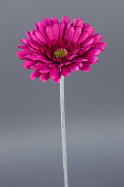 12 Stück Gerbera 56cm mit Glitter creme-weiß PF künstliche Blumen Kunstblumen