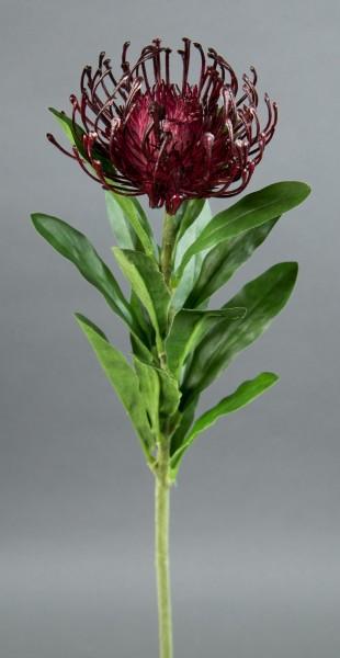 Nadelkissen-Protea Leucospermum Silberbaumgewächs 68cm bordeaux CG Kunstblumen künstliche Blumen-