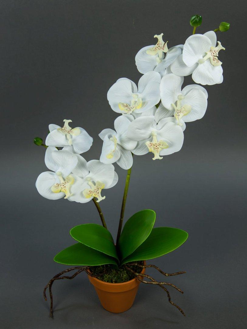 orchidee real touch 60cm wei im topf ga k nstliche blumen. Black Bedroom Furniture Sets. Home Design Ideas