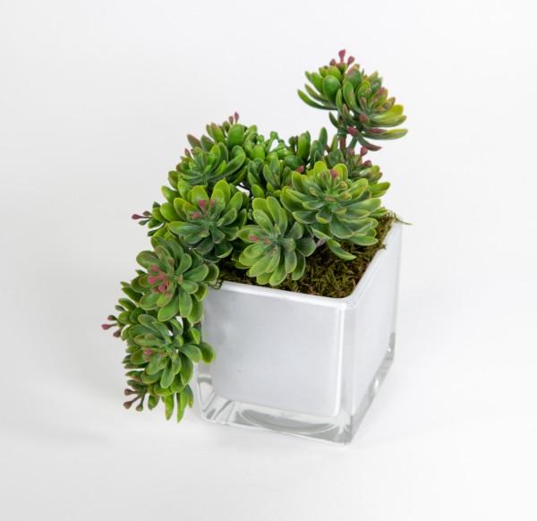 Sukkulente Sedum 18x15x14cm grün-rot im Glastopf FT Kunstpflanzen künstliche Pflanzen