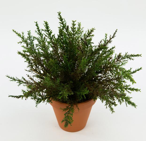 koniferenbusch 26cm ohne topf dp konifere thuja kunstbaum kunstpflanzen zeder konifere. Black Bedroom Furniture Sets. Home Design Ideas