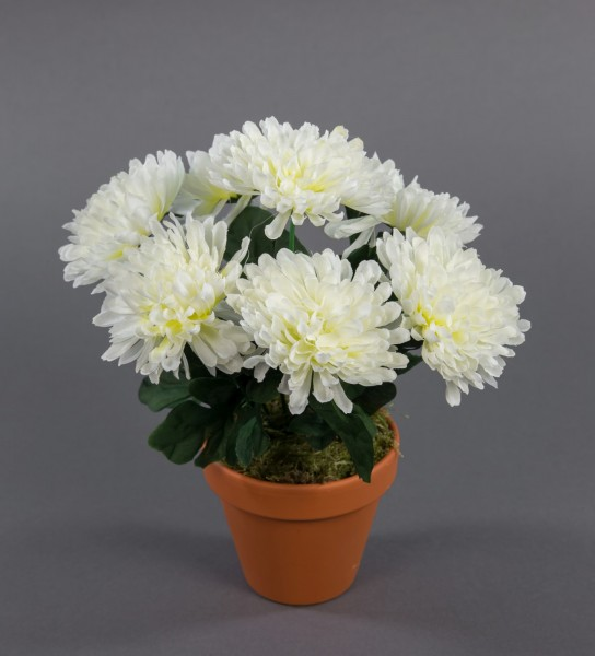 Chrysanthemenbusch 26cm weiß im Topf DP Kunstpflanzen künstliche Chrysantheme Pflanzen Blumen