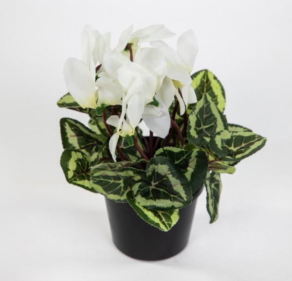Mini Alpenveilchen / Cyclame 17cm weiß im Topf DP Kunstblumen künstliche Blumen Pflanze Kunstpflanze