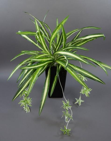 Grünlilie 60x54cm -ohne Topf- PF Kunstpflanzen künstliche Pflanzen Spider-Pflanze