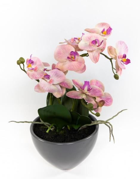 Orchidee 38x26cm rosa-pink in grauer Keramikschale DP Kunstblumen künstliche Blumen Phalaenopsis