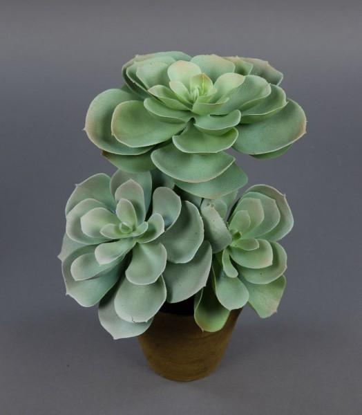 Sukkulente Echeveria 24x20cm im Topf PF künstliche Pflanzen Sukkulenten Kunstpflanzen