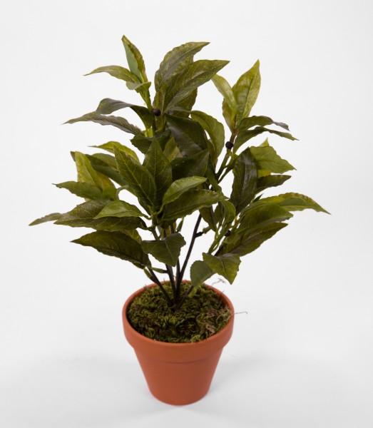 Lorbeerbusch Real Touch 40cm GA Kunstpflanzen künstliche Pflanzen künstlicher Gewürzlorbeer