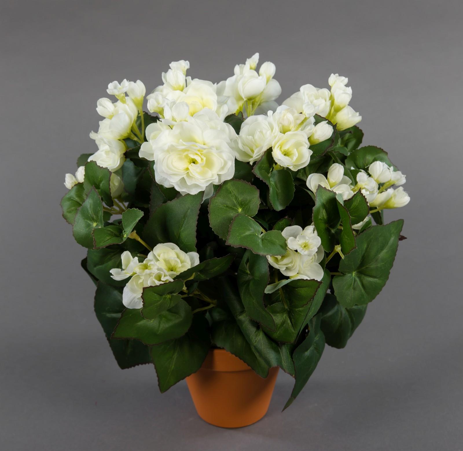 gro e begonie 32cm wei im topf lm kunstpflanzen k nstliche pflanzen kunstblumen begonienbusch. Black Bedroom Furniture Sets. Home Design Ideas
