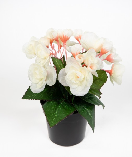 Begonie 20cm weiß im Topf JA Kunstpflanzen Begonienbusch künstliche Blumen Pflanzen Kunstblumen