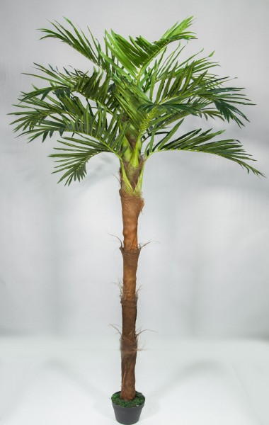 Phönixpalme mit Kokosstamm 220cm ZJ künstliche Palmen Kunstpalmen Kunstpflanzen Dekopalme