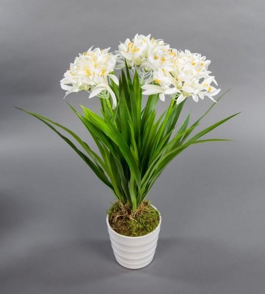 Agapanthus / Schmucklilie 50cm weiß im weißen Dekotopf DP Kunstpflanzen künstliche Pflanzen Blumen