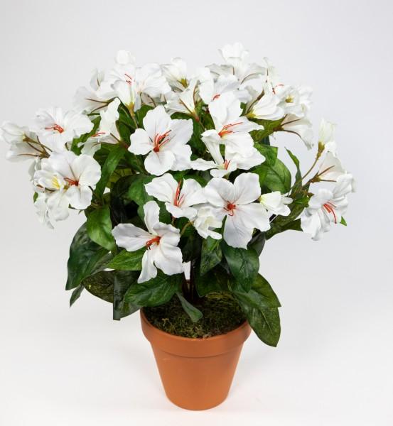 Großer Hibiskus 42cm weiß-creme im Topf ZF künstliche Pflanze künstlicher Eibisch Kunstblume Kunstpf