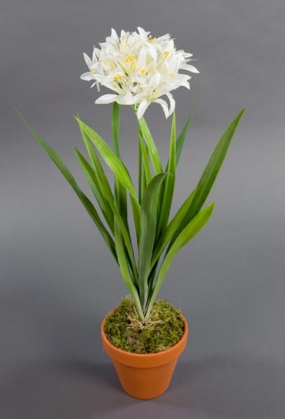 Agapanthus / Schmucklilie 48cm weiß im Topf DP Kunstpflanzen künstliche Pflanzen Blumen Kunstblumen