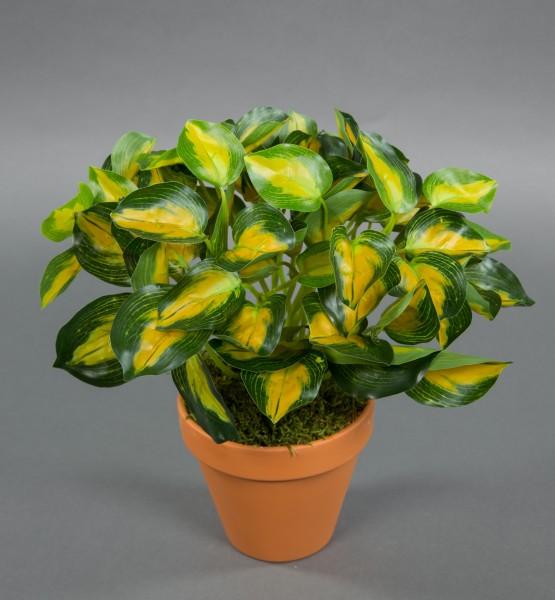 Buntnessel 28cm grün-gelb im Topf ZF Kunstpflanzen künstliche Pflanzen Nessel