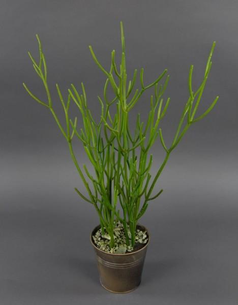 Euphorbia 58cm im Zinktopf GA Kunstpflanze künstlicher Bleistiftstrauch Milchbusch Wolfsmilchgewächs