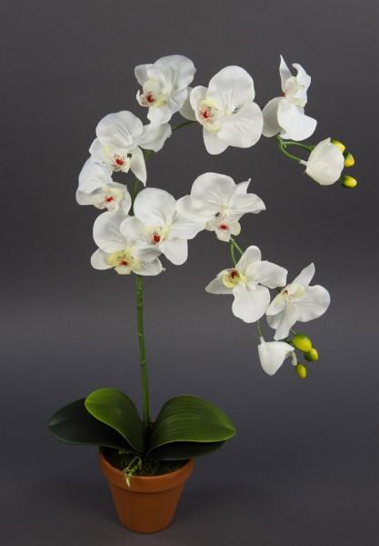 Orchidee 65cm weiß-creme DP Kunstblumen künstliche Blumen Orchideen Kunstpflanzen