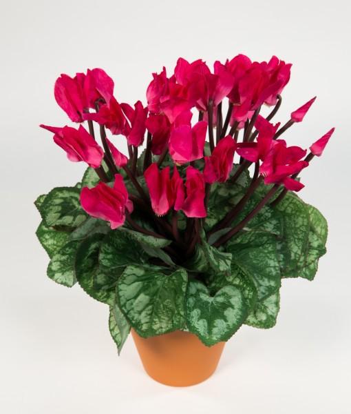 Großes Alpenveilchen 32cm rosa im Topf NT Kunstpflanzen Kunstblumen künstliches
