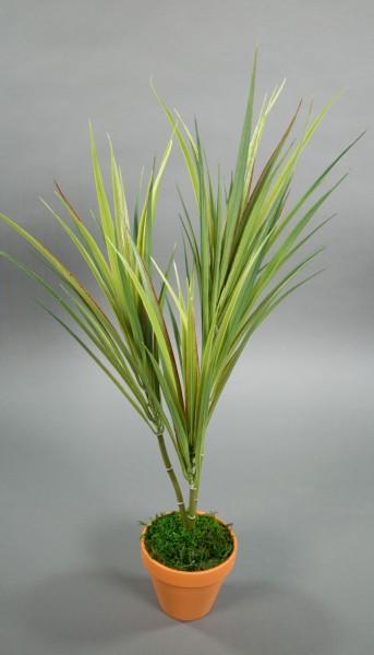 Dracena 62cm -3-fach- im Topf GA Kunstpflanzen Kunstpalmen künstliche Pflanzen Palmen