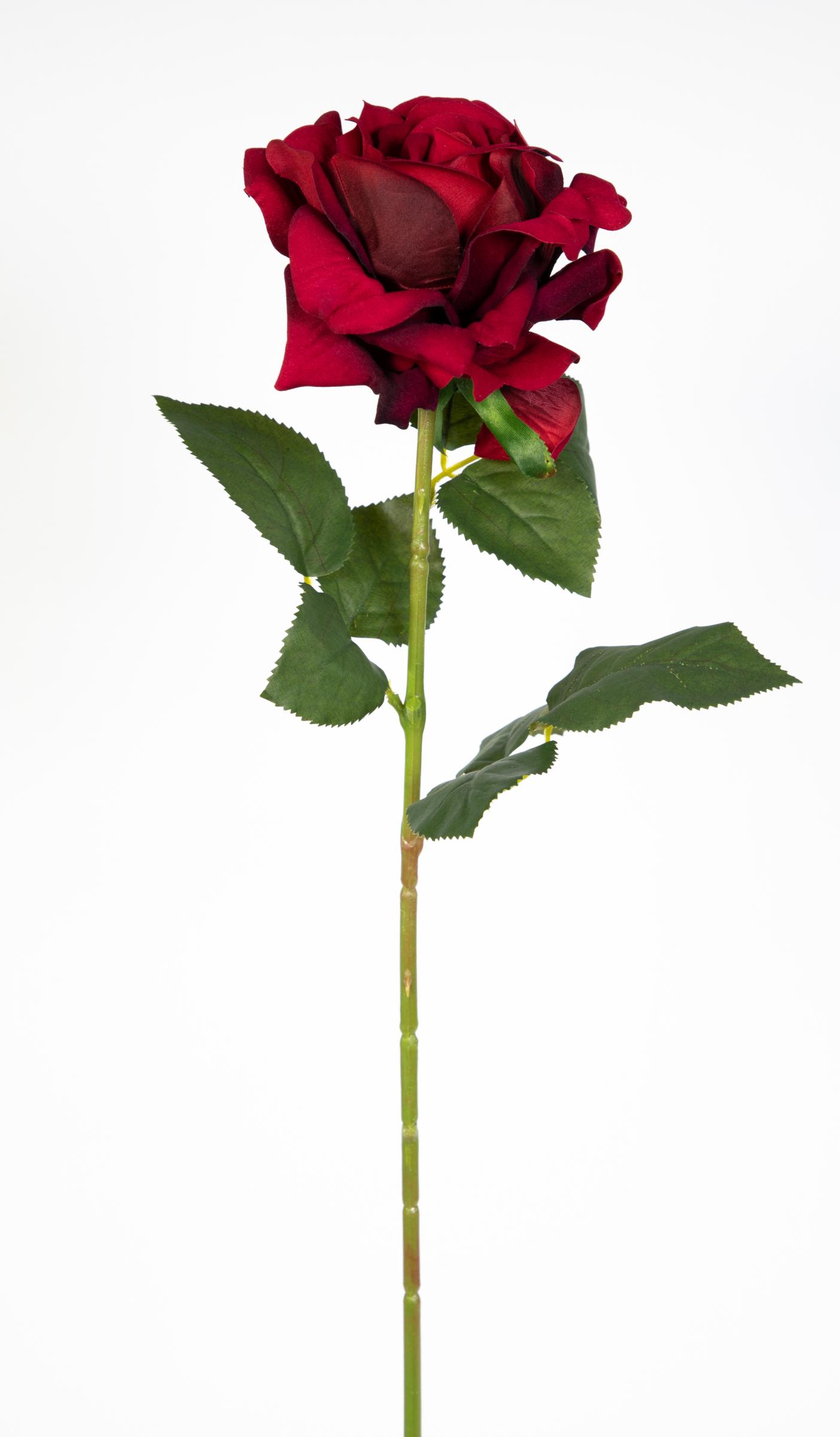 Baccara Rose Preis