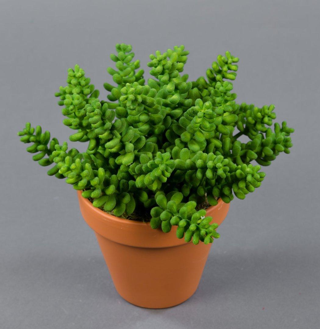 sedumbusch 20cm im topf lm kunstpflanzen k nstliche pflanzen k nstliches sedum sukkulenten. Black Bedroom Furniture Sets. Home Design Ideas