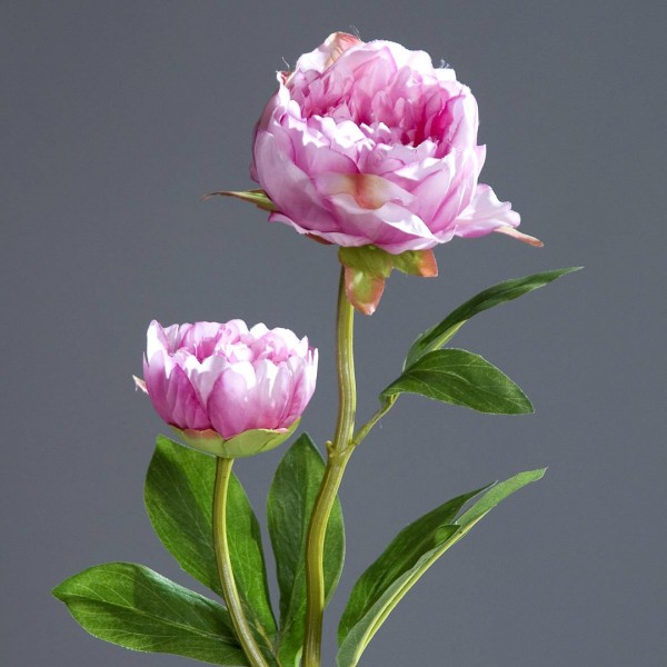 Pfingstrose mit 2 Blüten 60cm rosa-pink DP Kunstblumen Seidenblumen künstliche Blumen Päonie