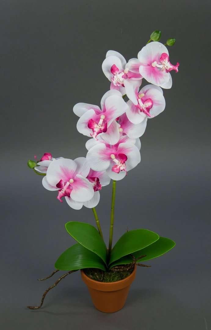 Orchidee Real Touch 60cm rosa-weiß im Topf GA künstliche Blumen ...