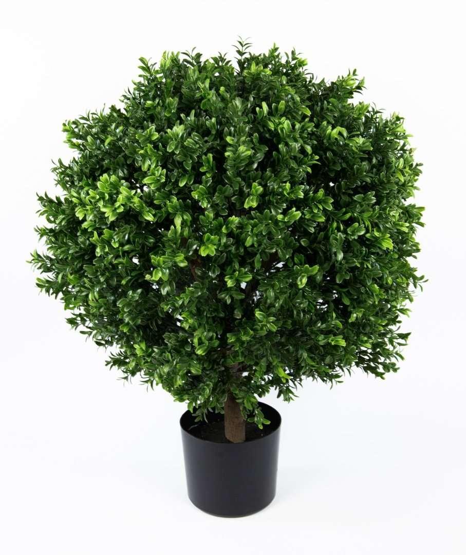 wundersch nen buchsbaum pflanzen einzigartige ideen zum. Black Bedroom Furniture Sets. Home Design Ideas