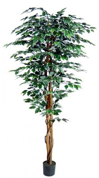 Ficus Excotica 180cm grün-creme DA Kunstbaum Kunstpflanzen künstlicher Baum Dekobaum Birkenfeige
