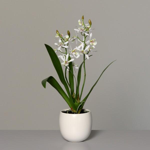 Orchidee 40x30cm weiß im weißen Keramiktopf DP Kunstblumen künstliche Blumen Kunstpflanzen