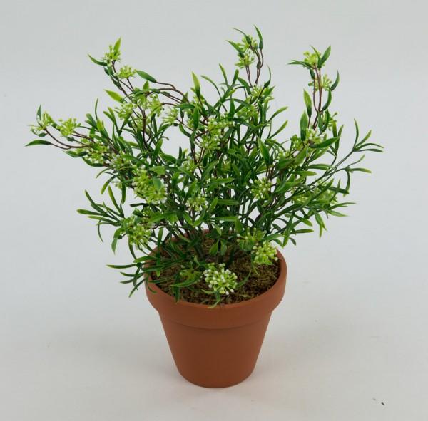 Astilbenbusch weiß-grün 28cm im Topf AR Kunstpflanzen Kunstblumen künstliche Pflanze Astilbe