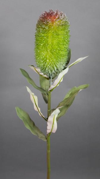 Banksie / Protea 72cm grün GA Kunstblumen künstliche Blumen Pflanzen Kunstzweig