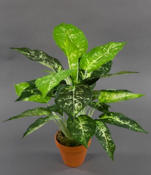 Dieffenbachia 46cm im Topf ZF Kunstpflanzen künstliche PflanzenDieffenbachiapflanze