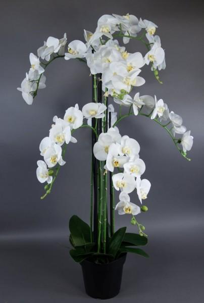 Orchidee 120x70cm Real Touch weiß CG künstliche Orchideen Blumen Kunstpflanzen Kunstblumen