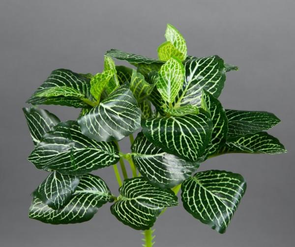 Fittonie 22cm grün-weiß ZF Kunstpflanzen künstliche Pflanzen Mosaikpflanze