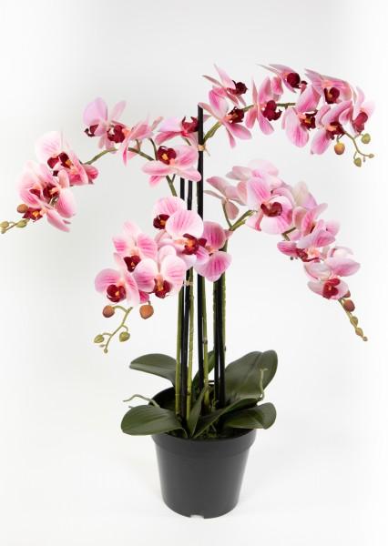 Orchidee 80x50cm Real Touch rosa-weiß CG künstliche Orchideen Blumen Kunstpflanzen Kunstblumen