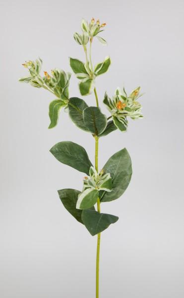 Euphorbiazweig 68cm CG Kunstzweig künstliche Euphorbia Wolfsmilch Dekozweig Kunstpflanzen