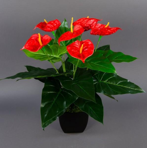 Anthurie Real Touch 56x50cm rot im schw. Dekotopf ZJ Kunstblumen künstliche Flamingoblume