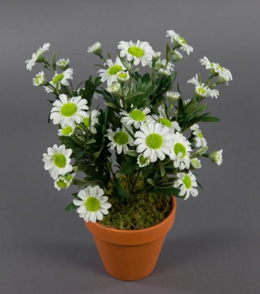 Margeritenbusch 32cm weiß im Topf ZF Kunstpflanzen künstliche Margerite Pflanze Blumen Kunstblumen