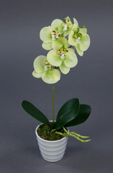 Orchidee Real Touch 30cm grün im weißen Dekotopf GA künstliche Blumen Orchideen Kunstpflanzen