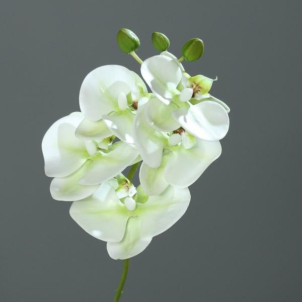 Orchideenzweig Real Touch 36cm weiß-grün DP Kunstblumen künstliche Orchidee Orchideen Blumen