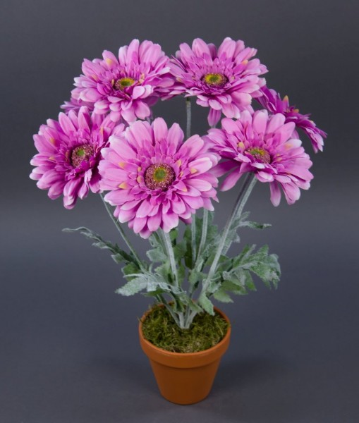 Gerbera 45cm lavendel im Topf LM Kunstpflanzen künstliche Pflanze Blumen Kunstblumen