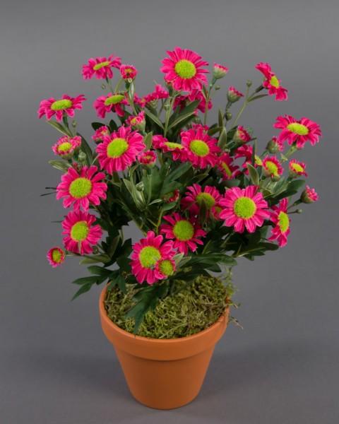 Margeritenbusch 32cm rosa-pink im Topf ZF Kunstpflanzen künstliche Margerite Pflanze Blumen Kunstblu