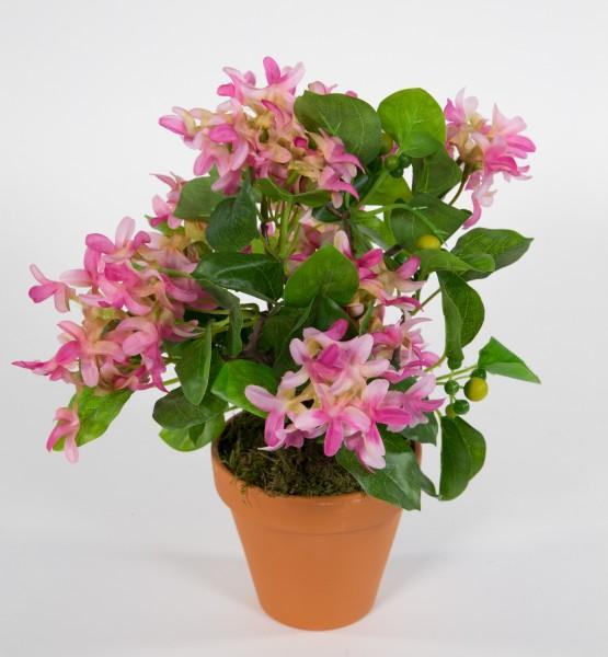 Fliederbusch 32x26cm rosa-pink im Topf ZF Kunstpflanzen Kunstblumen künstliche Pflanzen Flieder