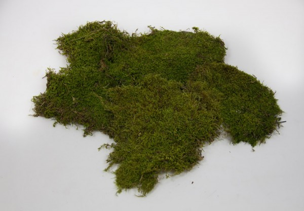 (21,98/kg) 500g Plattenmoos naturgrün Naturmoos