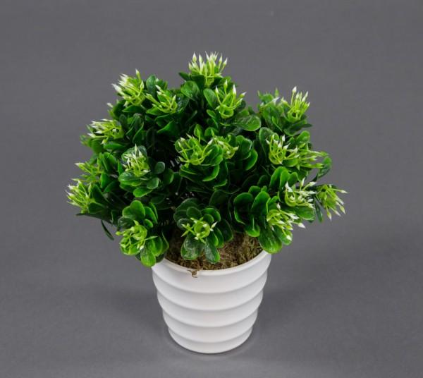 Buchsbaumbusch 16cm im weißen Dekotopf LM künstlicher Buchbusch Kunstpflanzen